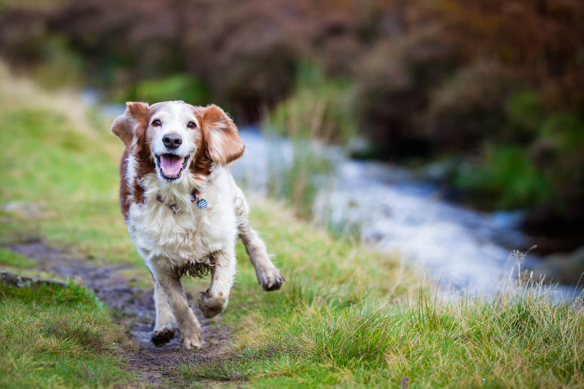 dog running by the side of a river