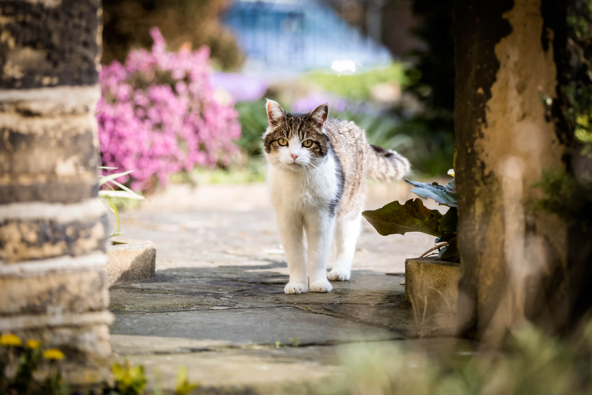 cat standing on some paving stones