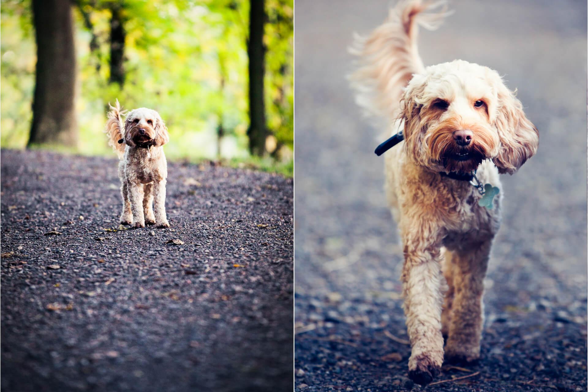 puppy walking along a path