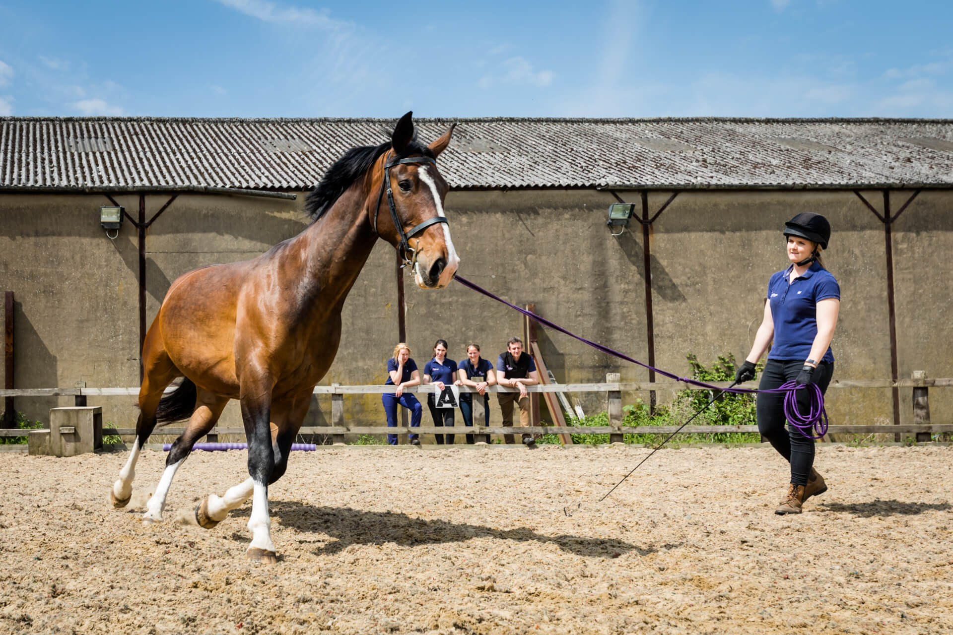 trainer running a horse around a paddock